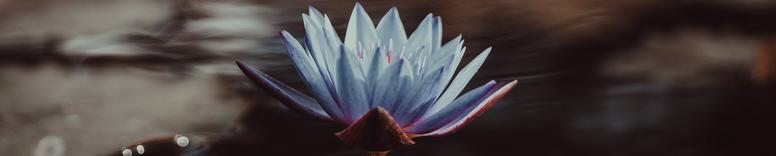 Em defesa de um budismo para estavida
